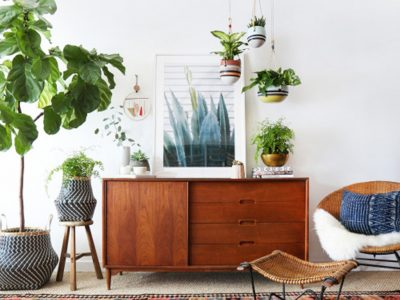 The Most Beautiful Office Plants that Boost Productivity⏤and How to Care for Them